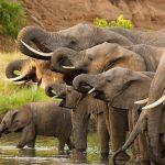 successful safari