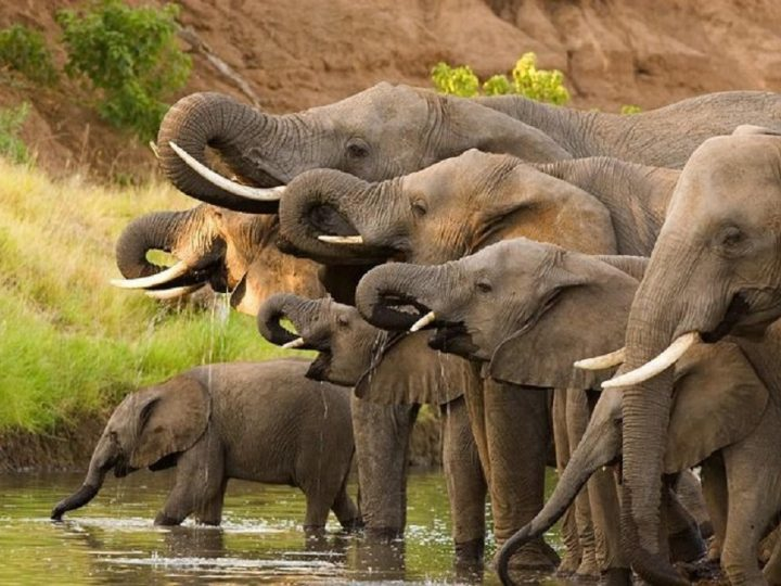 10 mistakes to avoid for a successful safari