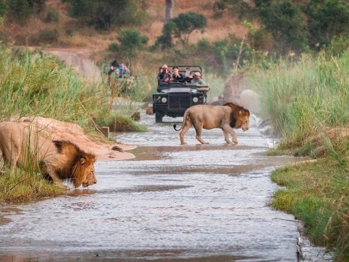 The Best Destinations For A Wildlife Safari