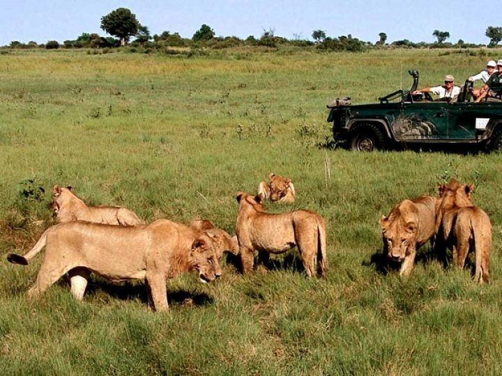 The Best Safari Destinations in the World