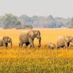 Best African Safari Parks
