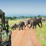 Tips African safari