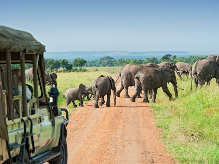 Tips for doing an African safari: Things to Know Before Going on Safari