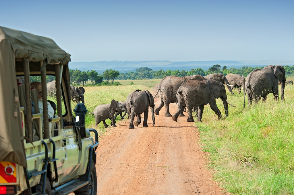 Tips African safari