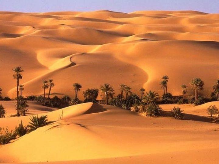 Having a Magnificent Travel in Dubai Liwa Safari