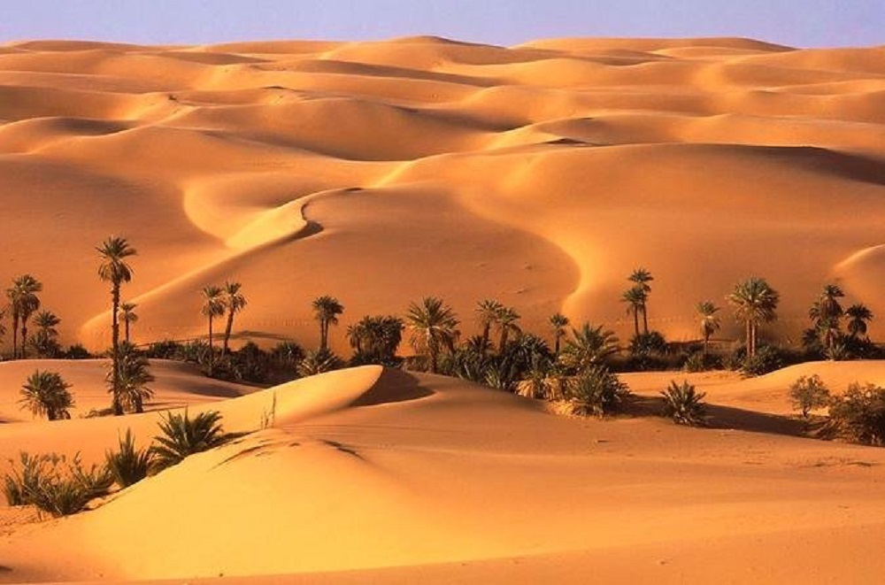 Dubai Liwa Safari