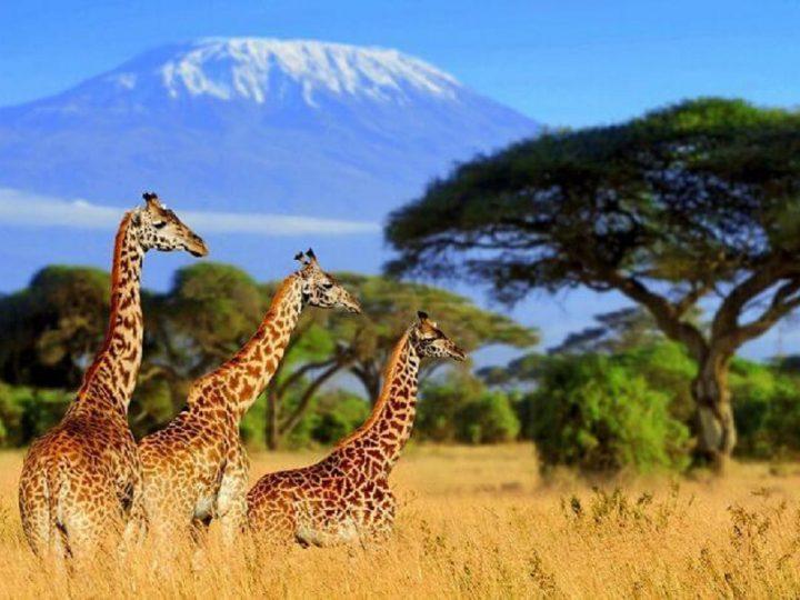 The Magic Of A South African Safari