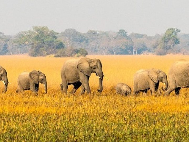 Top 10 Best African Safari Parks and Destinations of 2020