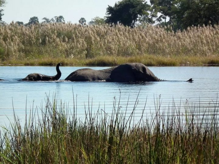 African Travel Ideas – The Okavango Delta
